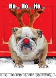 christmas bull dog