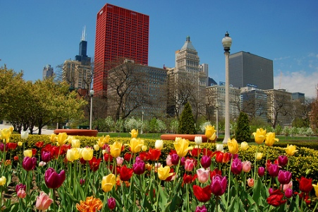 spring in chicago